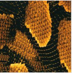 Black & Orange Snake Skin