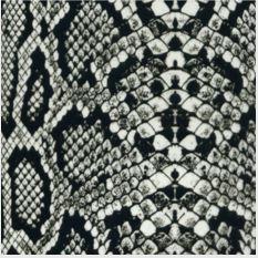 Clear Snake Skin